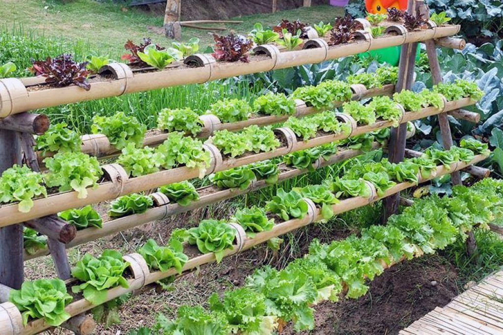 Hydroponics DIY: How to Create Your Own