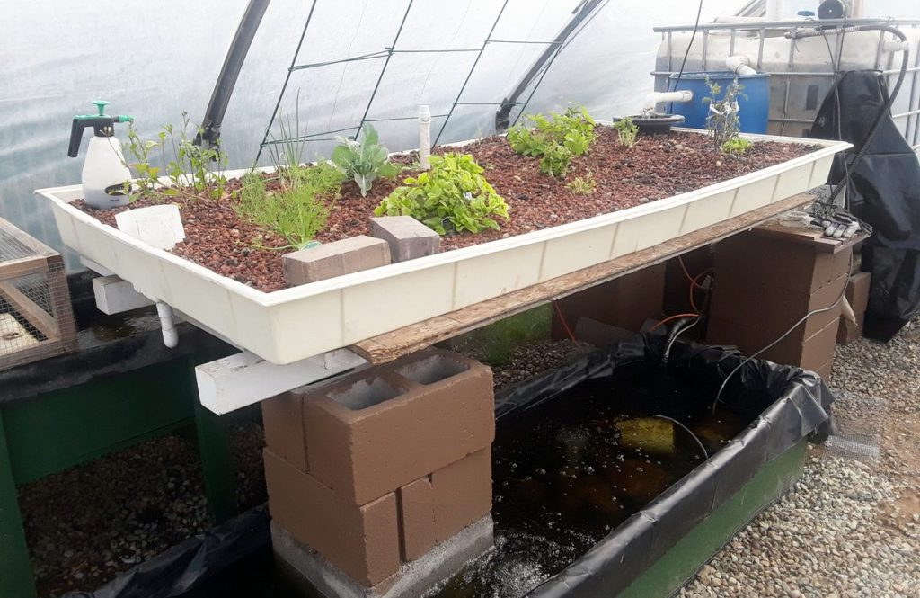 how does aquaponics work?